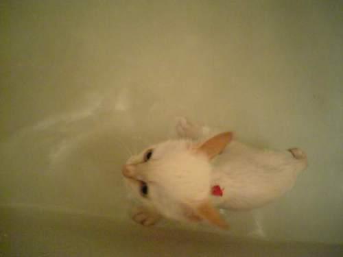 泳いじゃった